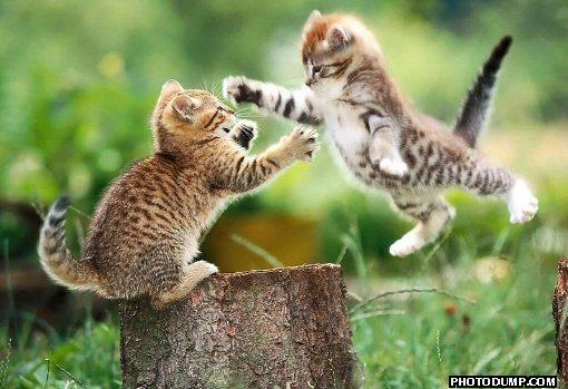 (Fight)